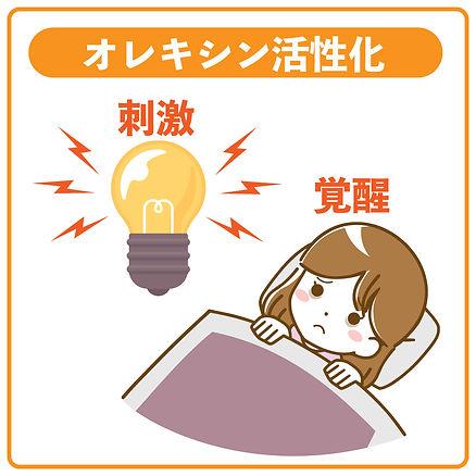 オレキシン活性化→覚醒
