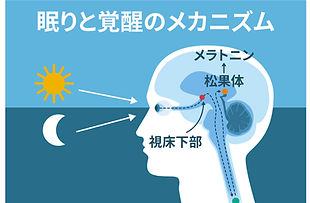 sleep_awakening_mechanism_.jpg