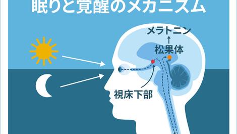 睡眠と覚醒のメカニズム~【松果体】と【メラトニン】の作用