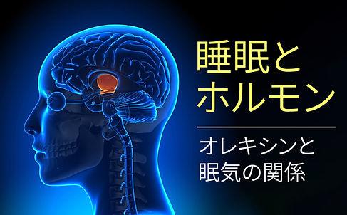 sleep_hormones_orexin.jpg