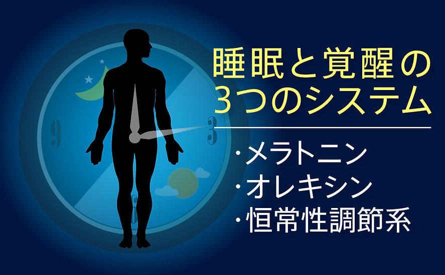 睡眠と覚醒のメカニズム(3)~3つのシステム―メラトニン | オレキシン | 恒常性調節系~