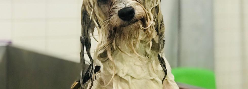 Bob bath