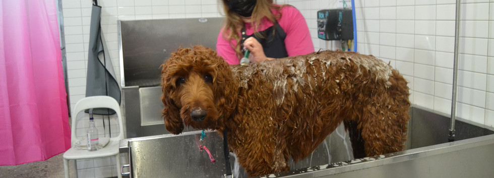 golden doodle bath