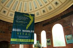 Body Worlds Vital Inside Venue