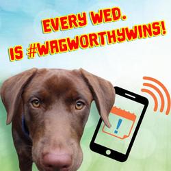 NELR_ReminderAuctions_SocialPost