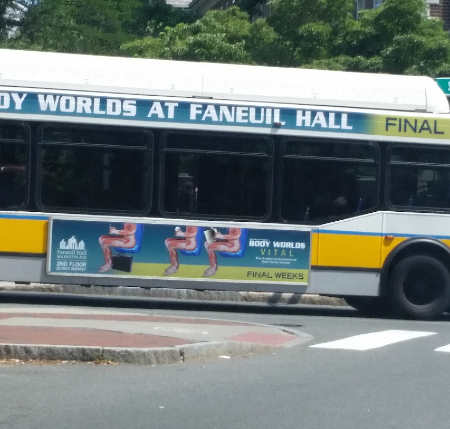 Body Worlds Vital MBTA Bus