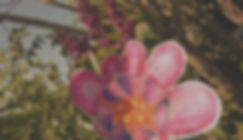blumeweb_edited_edited.jpg