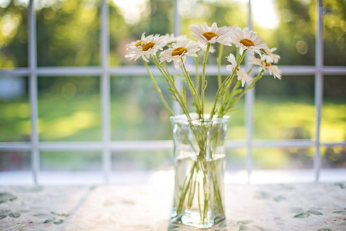 daisies-2485064_1920.jpg