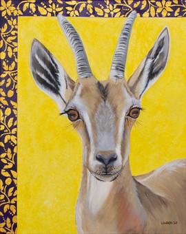 'Young Nubian Ibex'
