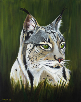 'Last Glance - Iberian Lynx'