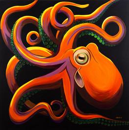 'Cephalopoda - Octupus Vulgaris'