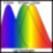 cone-wavelengths.jpg