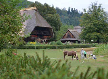 Top 5 places to visit with kids in the Black Forest - Interactive map