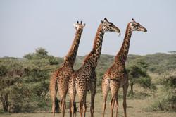 africa-animal-photography-animals-blur-2