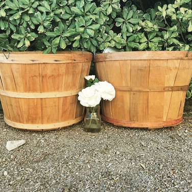 """BUSHELL BASKET  Whether you need to add these baskets to your food station or a confetti station, you can't go wrong.  Put some apples, oranges or even popcorn inside them...OR...put your ceremony confetti inside.  Dimensions: 12"""" x 17.5""""  Qty: 2"""