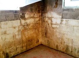 mold-in-basement_44263_3.jpg