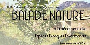 balade-nature-adhco.jpg