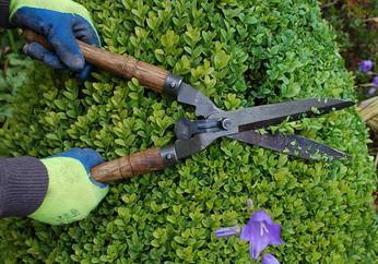 Garden-maintanance.jpg