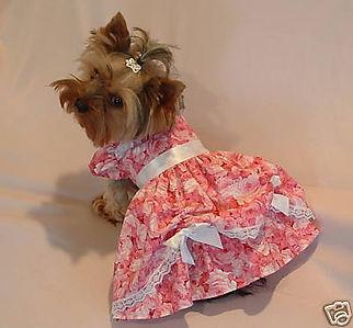 Afternoon Tea Rose Dog Dress.jpg