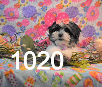 1020%20Fem%20(1)_edited.jpg
