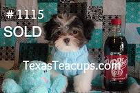 Daisy-Puppy-1115_edited.jpg