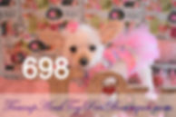 698%20Female%20Yorkie_edited.jpg