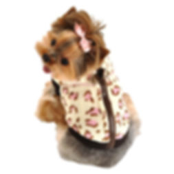 Teacup dog Jacket.jpg