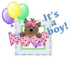 TexasTeacups Male Boy Puppy Coming Soon.JPG
