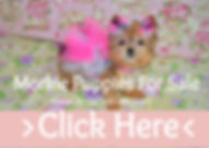 Micro%2520Tiny%2520Teacup%2520Morkie%252