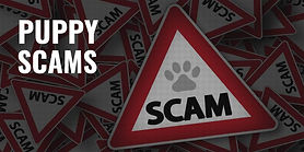 puppy-scams-800x400.jpg
