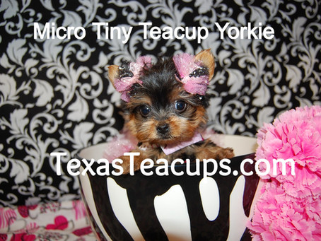 Cheap Teacup & Toy Puppy Scams, Counterfeit Teacup/Toy Breeders, Puppy Mill Cover Up Sellers.