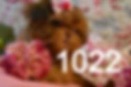Red%20ShihTzu%20Puppy%20For%20Sale%20102