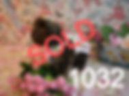 1032%2520Female%2520(7)_edited_edited.jp
