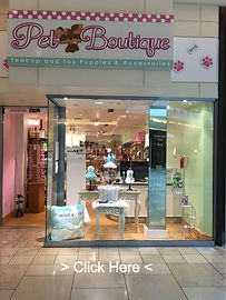 Teacup & Toy Pets Boutique Plano Texas (
