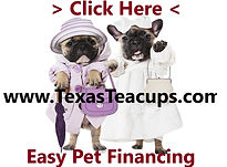 Payment plan on Miniature french bulldogs for sale in Teacups.jpg