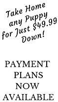 pet financing puppy payment.jpg
