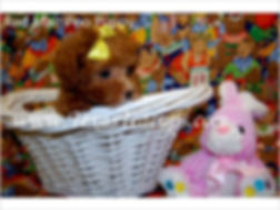 Red MaltePoo Puppies For Sale.jpg