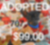 707%2520Male%2520Chihuahua%2520(9)_edite