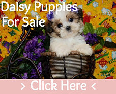 Daisy Puppy Dog For Sale Texas