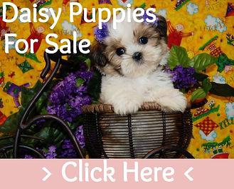 Daisy Puppy Dog For Sale Texas