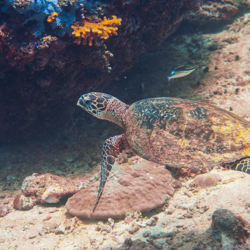 philippines.diving.21.JPG