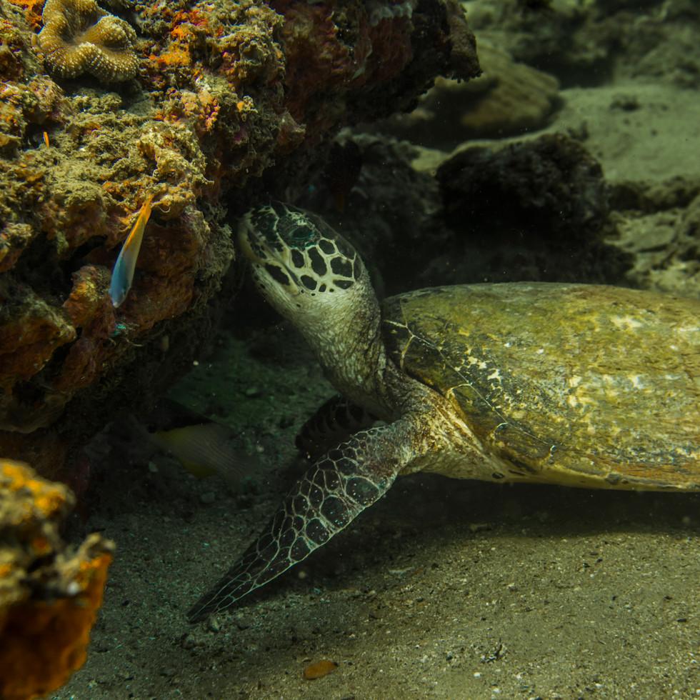 philippines.diving.15.JPG