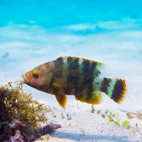 philippines.diving.8.JPG