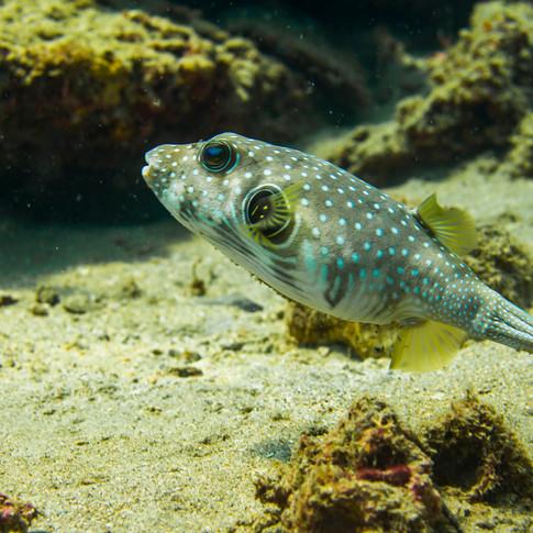 philippines.diving.12.JPG