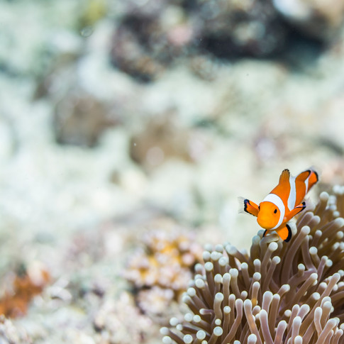 philippines.diving.1.JPG