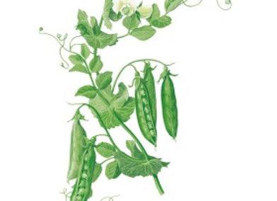 Pea Shelling Wando Seeds
