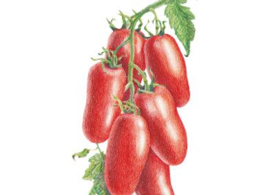 Tomato Pole Roma San Marzano Org Seeds