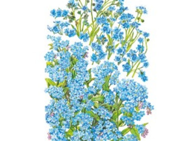 Forget-Me-Not Spring and Summer Seeds