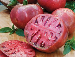 Heirloom. Cherokee Purple seeds, originating from Tennessee, are thought to have been passed down from Native Americans of the Cherokee tribe. This heirloom tomato variety consistently ranks very high in taste tests. Slice Cherokee Purple tomato for rich, dark color and unmatched sweet, rich taste on sandwiches or in salads. The tomato is a beautiful dusky pink with a deep, rich-red interior. Cherokee Purple grows well in most regions of the U.S. Let the fruit ripen on the vine for the best flavor. This one is a consistent taste test winner at tomato fests around the country. For an heirloom, it is a good producer. In our Alabama test garden, where conditions are ideal and the season is long, we harvest and average of 20 or more fruits from each plant. Vigorous vines benefit from strong staking or caging.