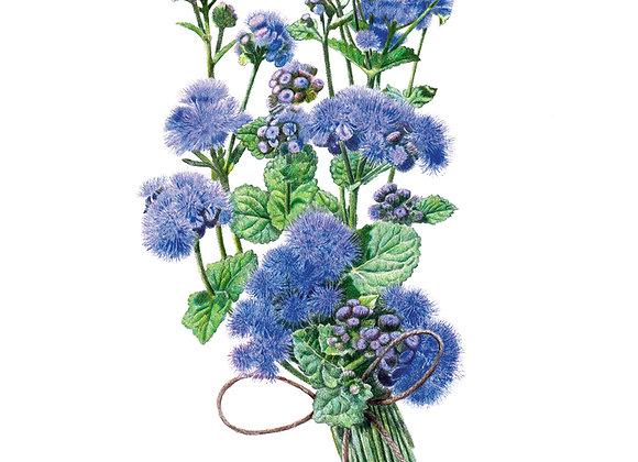 Ageratum Blue Planet hybrid Seeds
